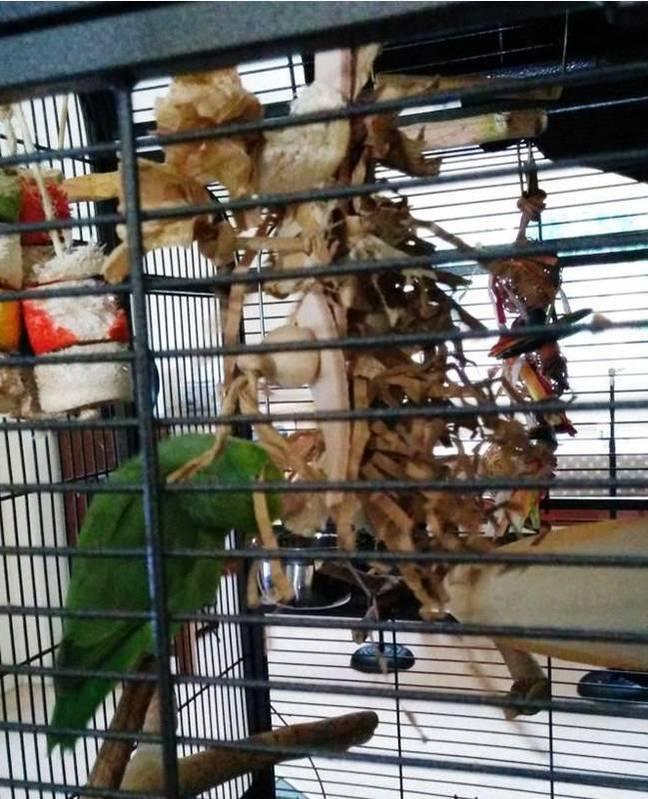 Shredding toys for parrotlets