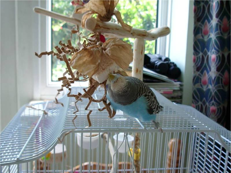 Forked Budgie Toy Perches UK