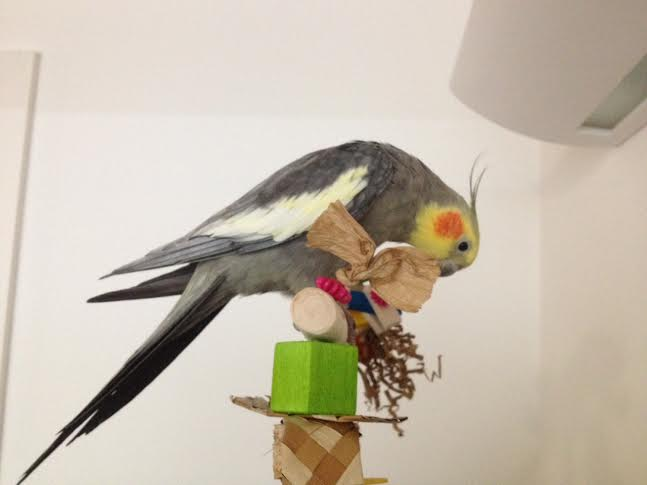Cockatiel Toy Perches UK