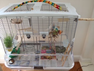 Budgie Cage set packs UK