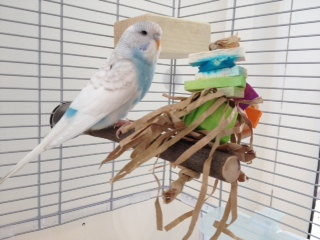 Willow toy perches UK