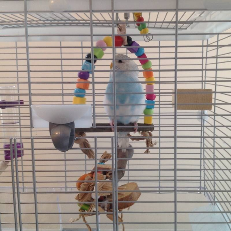 Budgie Swings for small cages can be made to suit