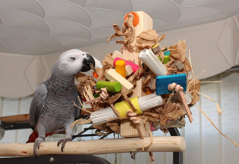 Bespoke Parrot Perching UK