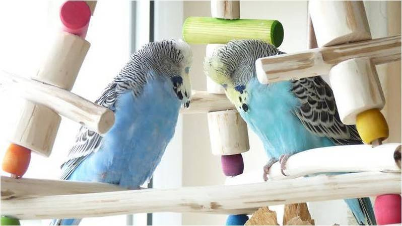 Hand Crafted Budgie Swings UK