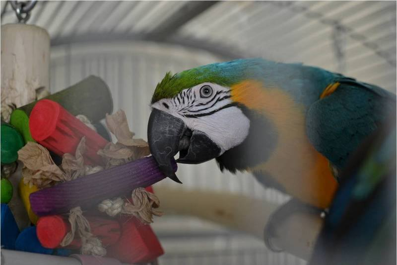 Macaw toys and toy making kits UK