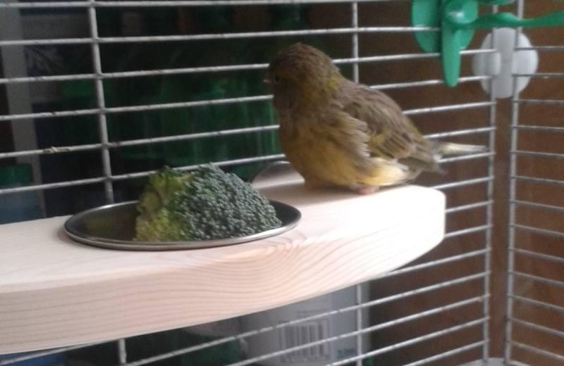 Feeding platforms for special needs birds