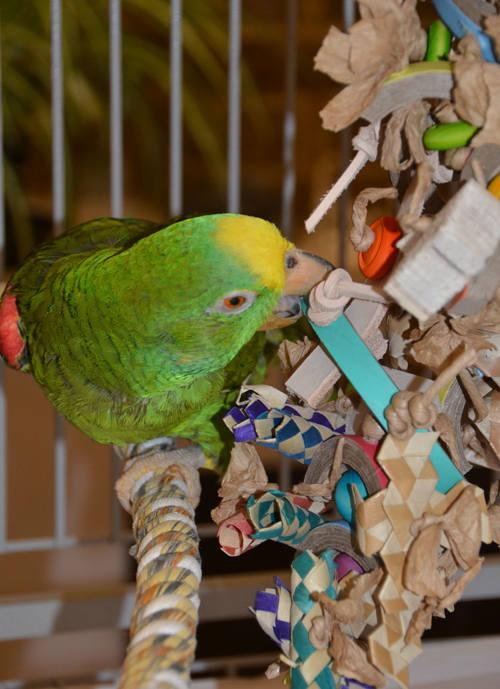 Parrot Shredding Toys-Bangle Fandangle