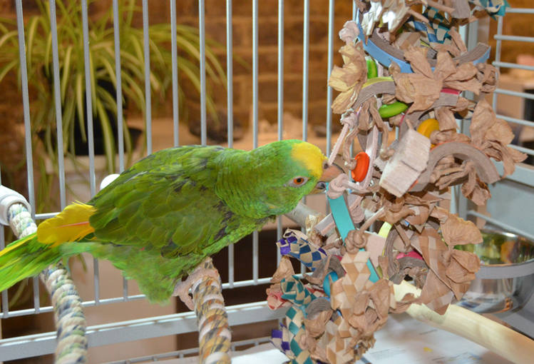 Toys for parrots with disabilities