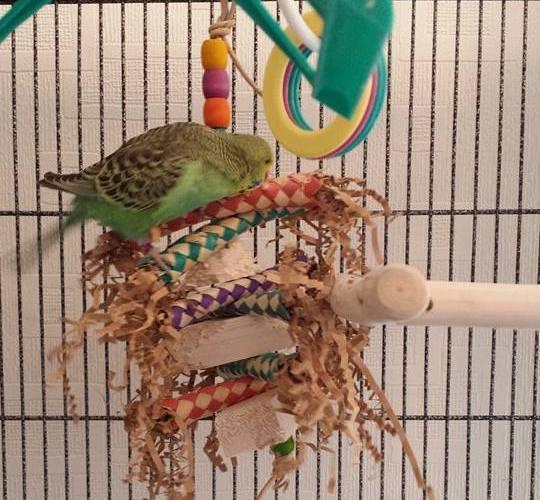 Balsa Shredding toys for all beaks