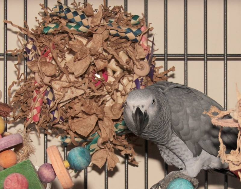 Cage Mounted Toy for African Greys UK