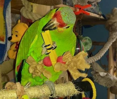 Parrot Foot Toys UK