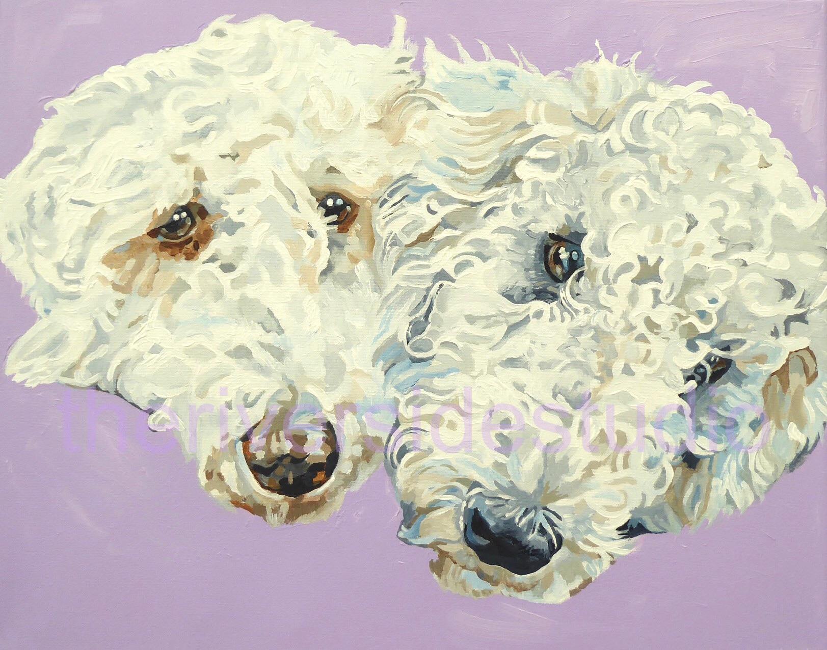 Gemma and Teo, Bedlington Terriers