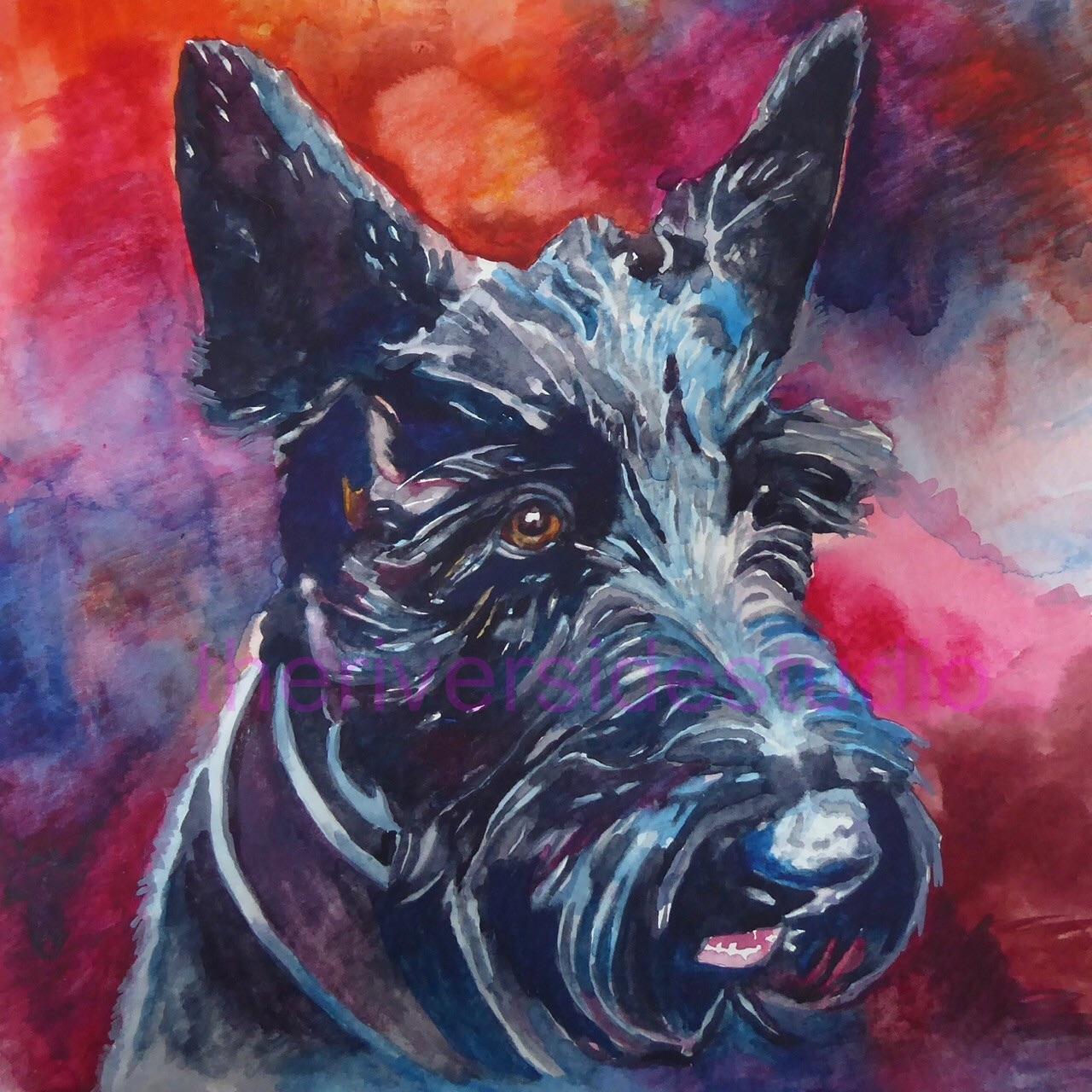 Bessie the Scottish Terrier