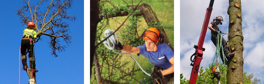 Tree Surgeon Images