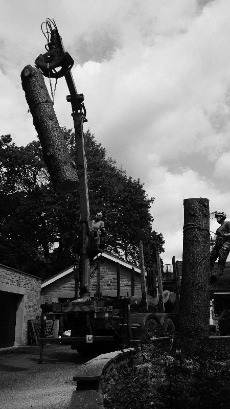 Crane assisted tree dismantling