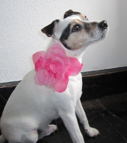 Handmade Posh Dog Corsage - 006
