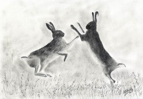 Hares 2