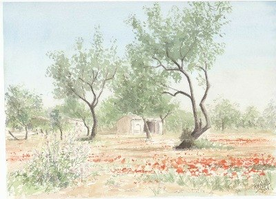 Poppies in the Campo