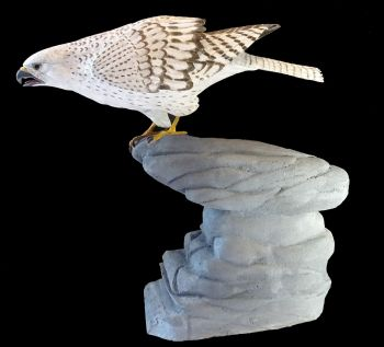 Greenland gyrfalcon on rocks