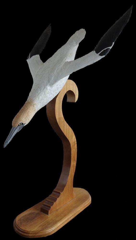 Plunging gannet