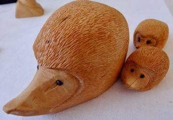 Miniature Hedgehog