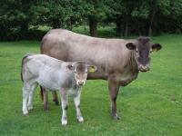 357 calf
