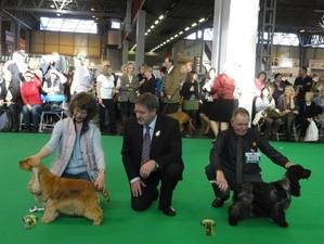 Crufts 2012 Judge with SJ & Blondie