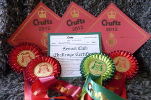 Crufts 2012 Rosettes 3 x FIC & Best Bitch