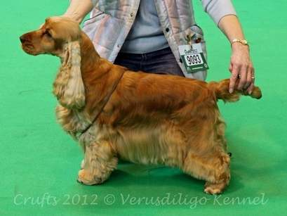 Blondie Crufts 2012