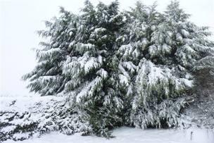 Snowscene 1 jan13