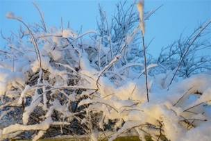 Snowscene 3 jan 13