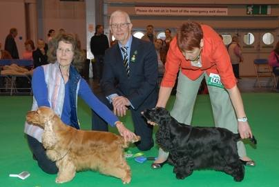Blondie Crufts 2013 (1)