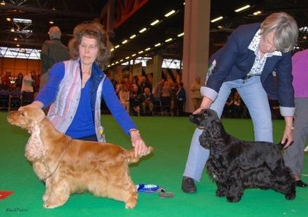 Crufts 2013 1st and 2nd in class