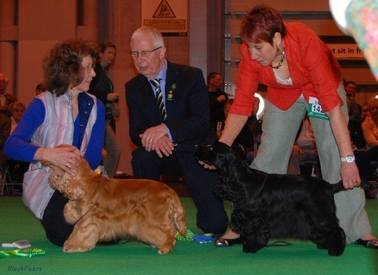 Crufts 2013 - chatting