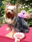 Pixie 1st prize.1