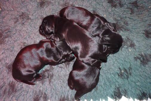 Venus pups (1) 16.08.2014