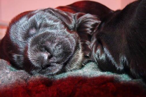 venus pups (2) 16.08.2014