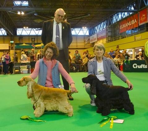 RolyDCC 2015 Crufts