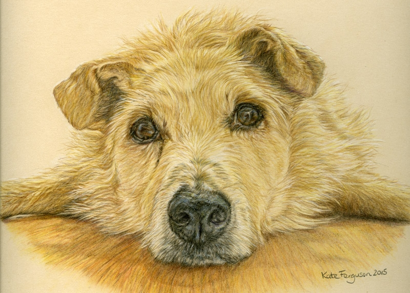 Coloured pencil commission - Dylan