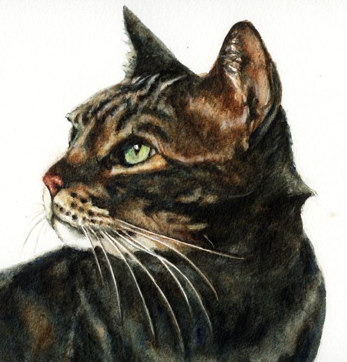 Alfie - watercolours