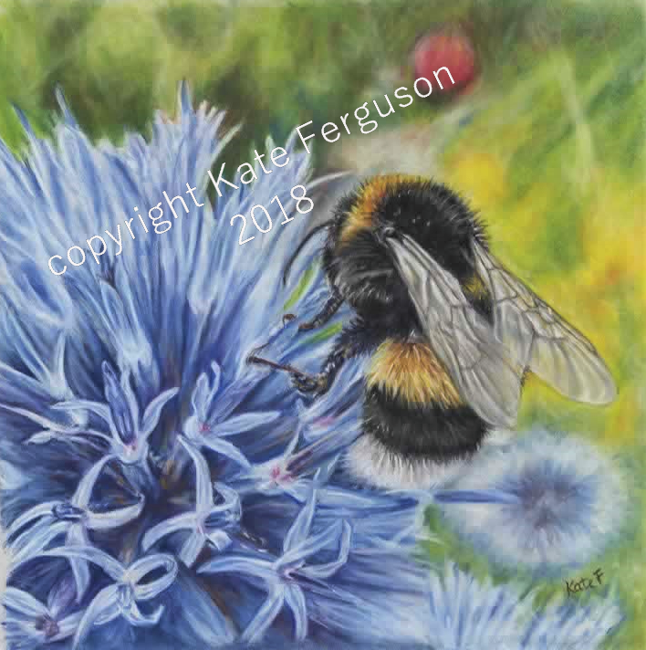 Bumble - Pastels on pastelmat. Private artwork.