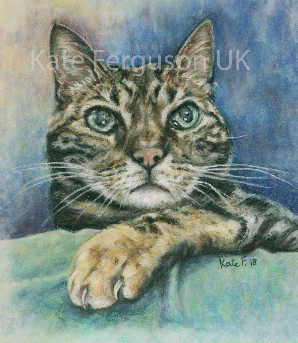 Pastels commission - Alfie