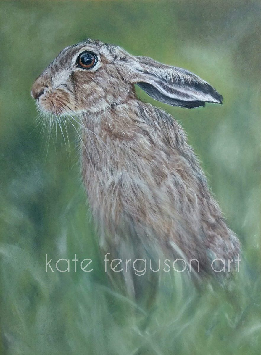 Hare - pastels