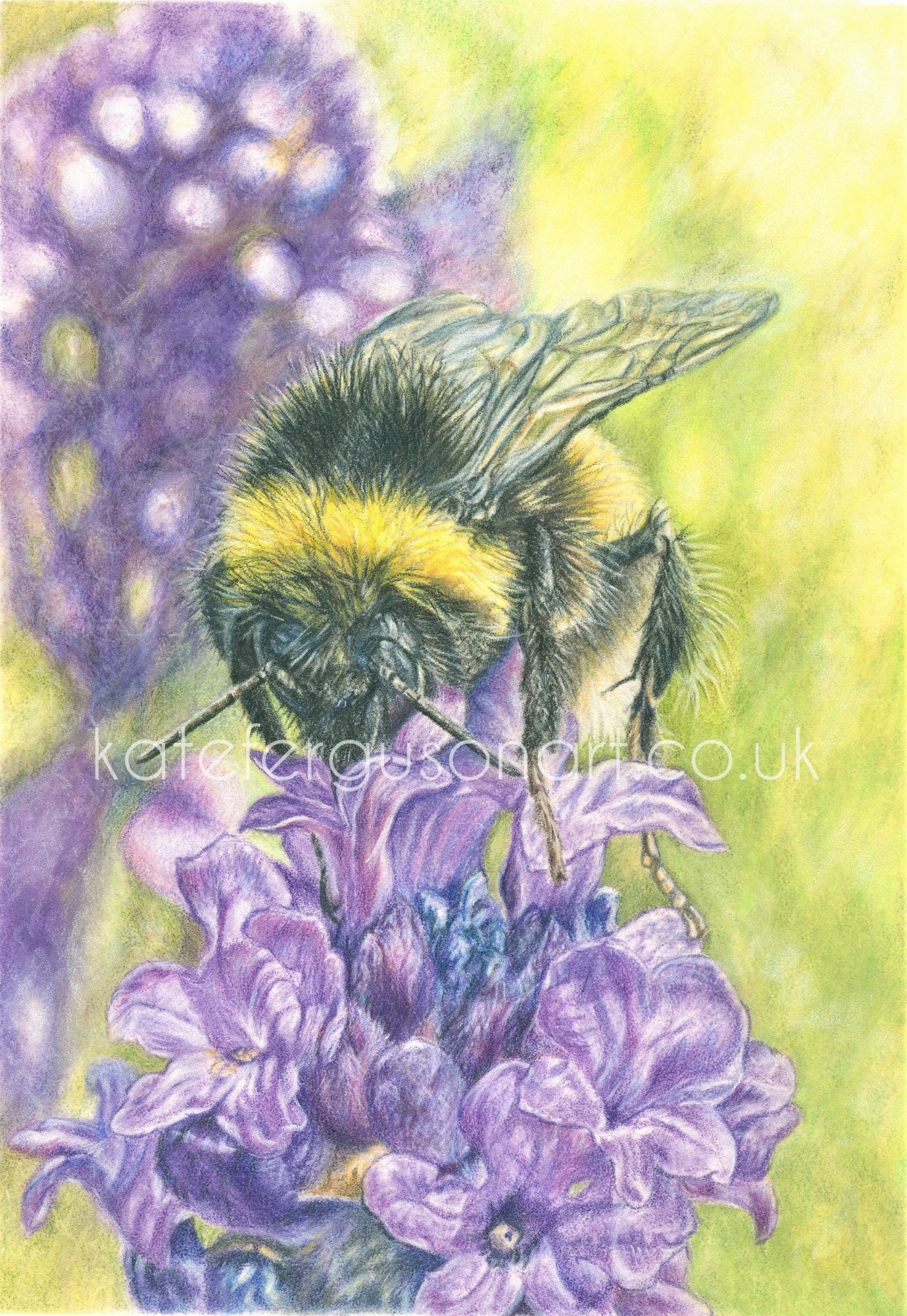 Bee - coloured pencils
