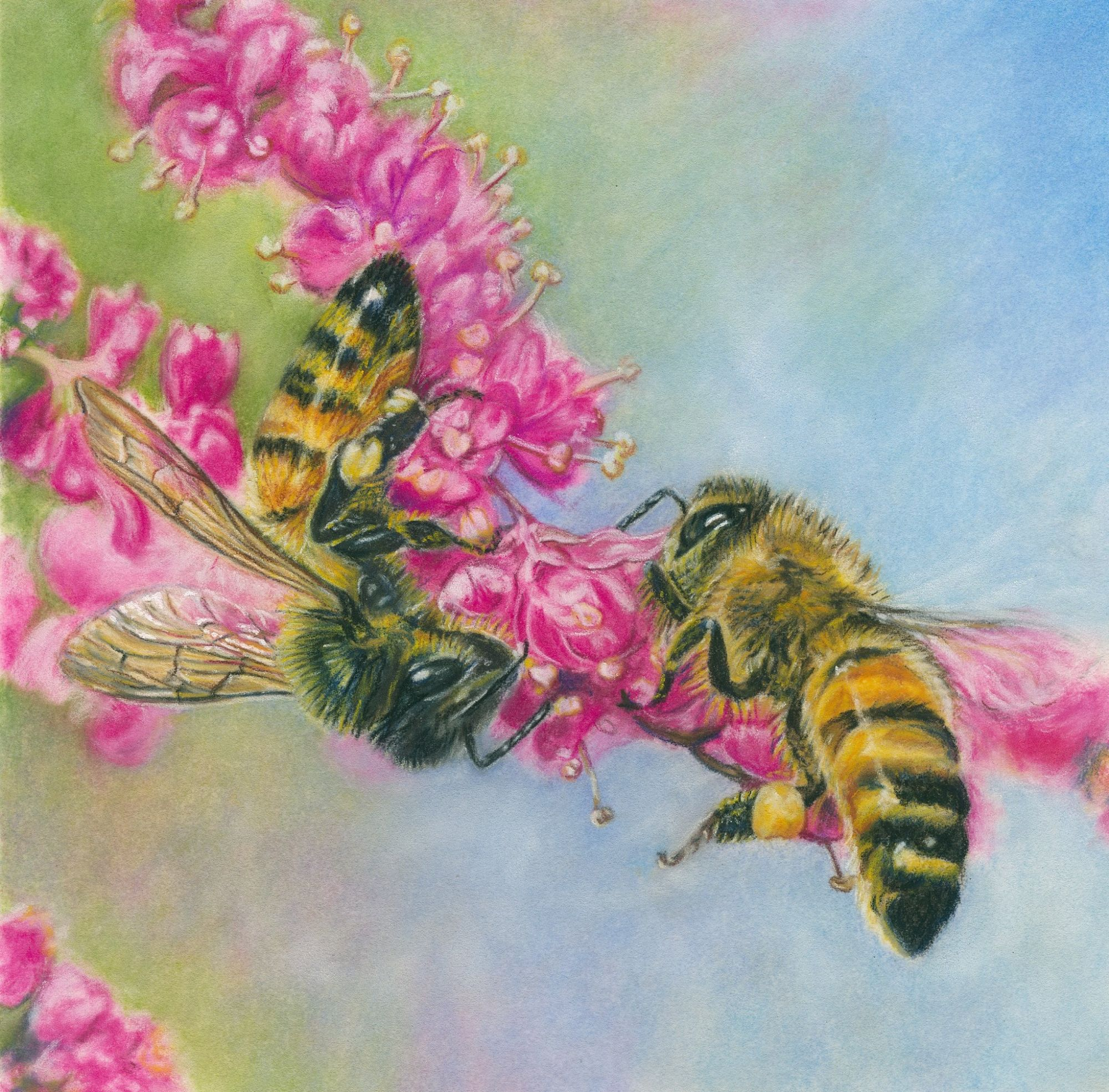 Honey bees - pastels