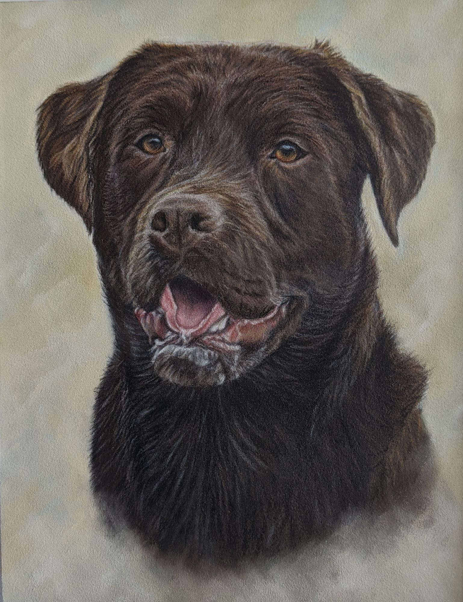 Coloured pencil dog portrait