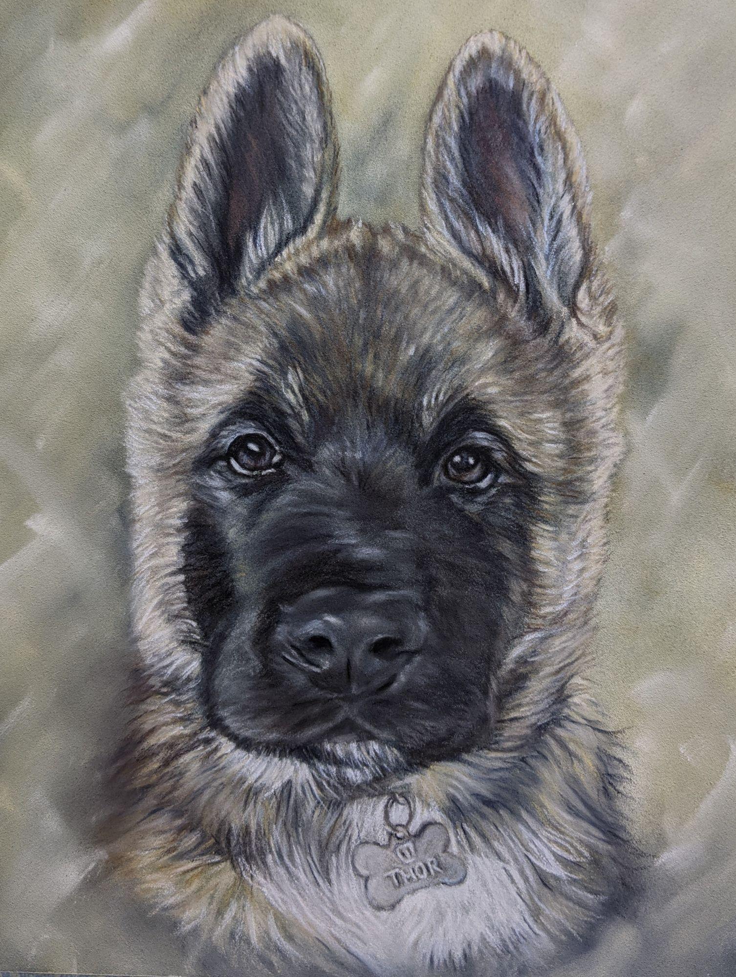 Pastels dog portrait