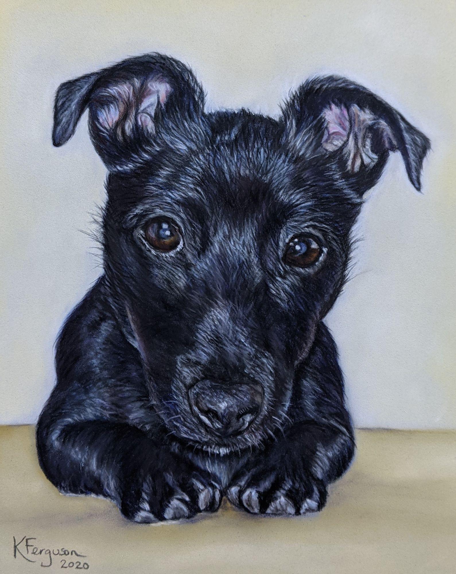 View dog portraits