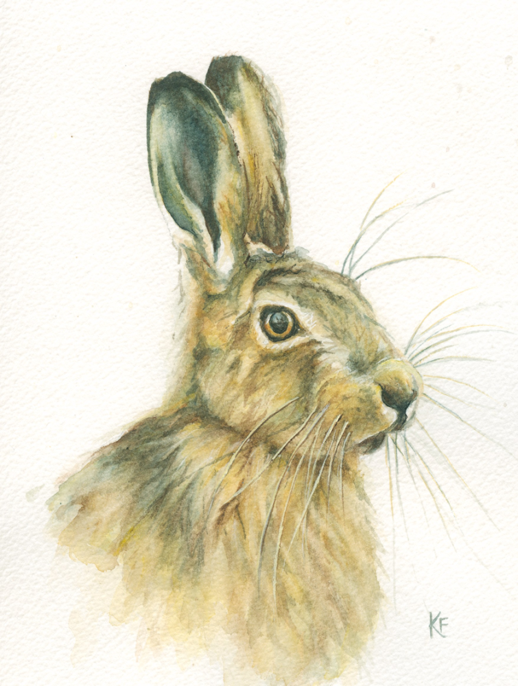 Little Haremounted watercolour painting