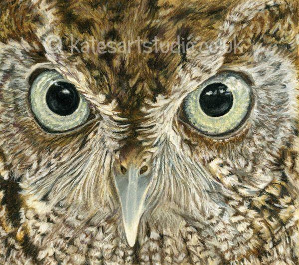 Screech owl - pastels